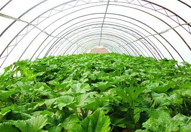 万博体育max手机注册太原丈子头市场:蔬菜价格分析